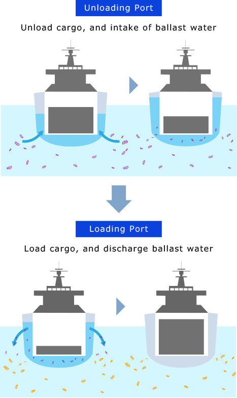[Unloading Port]Unload cargo, and intake of ballast water [Loading Port]Load cargo, and discharge ballast water
